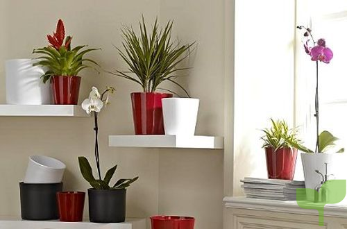 estantes flotantes - Ideas para decorar con plantas
