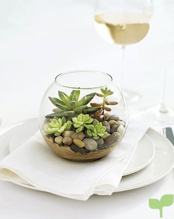 plantas como centros de mesa - Ideas para decorar con plantas